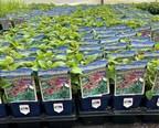 Virginia Nursery 'Plants a Better Tomorrow' with Blue Ridge Grown