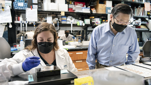 Gladstone scientists uncover evidence that neurons are more sensitive to degeneration when they contain high levels of the protein apoE, which is associated with a higher risk of developing Alzheimer's disease. Shown here in the lab are Nicole Koutsodendris (left) and Yadong Huang (right), authors of a new study. Photo: Michael Short/Gladstone Institutes