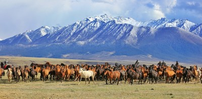 A herd of horses from a local farm gallop at the foot of the Qilian Mountains in Gansu province in May, 2020. [Photo by WANG CHAO FOR CHINA DAILY]