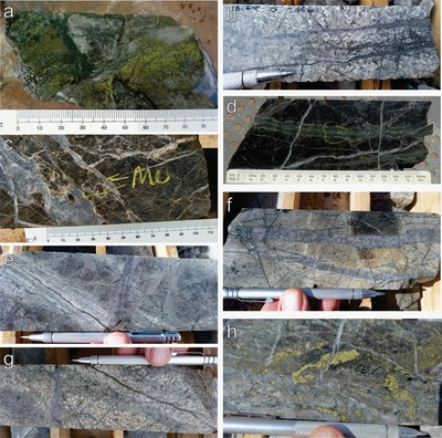 """Figure 1: Textural examples of mineralization and alteration styles in Esperanza drill hole 18-ESP-25: (a) chlorite-green sericite -chalcopyrite + late gypsum veinlets, (b) """"D"""" type pyrite-bornite-calcite veinlets with white sericite halo, (c) molybdenite in gypsum veinlets with strong pervasive secondary biotite and K-feldspar flooding, (d) chalcopyrite>pyrite veinlets with chlorite-green sericite haloes, cut by late gypsum veinlets, (e) """"A"""" type veinlet, chalcopyrite-chlorite-green sericite, cut by """"D"""" vein pyrite-bornite with white sericite halo, (f) stockwork of """"A"""" type veinlets, host altered by intense K-feldspar flooding, cut by hairline chalcopyrite-pyrite-chlorite veinlets, (g) """"A"""" type veinlets with chalcopyrite-chlorite-green sericite, cut by """"D"""" type pyrite-bornite veins with white sericite halo, (h) coarse chalcopyrite>pyrite-chlorite-green sericite veins with late gypsum veins. (CNW Group/Libero Copper & Gold Corporation.)"""