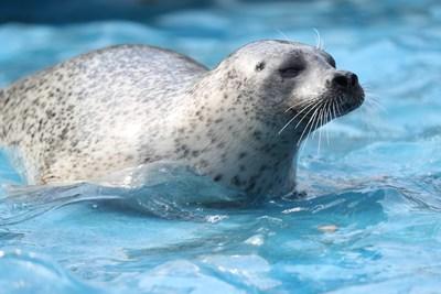 L'équipe de l'Aquarium du Québec est enthousiaste à l'idée d'accueillir à nouveau des visiteurs dès le jeudi 13 mai. La réouverture se fera dans le respect des consignes de la santé publique toujours en vigueur, ce qui suppose l'achat en ligne obligatoire du billet d'accès quotidien © SEPAQ Crédit Photo : Francis Doucet | AQU - Aquarium du Québec (Groupe CNW/Société des établissements de plein air du Québec)