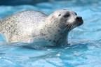 L'Aquarium du Québec rouvrira ses portes le 13 mai