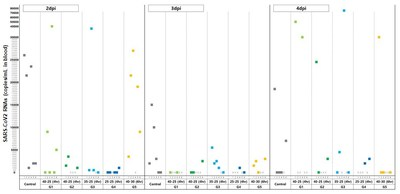 CP-COV-03's SARS-CoV2 in-vivo efficacy study results
