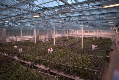 Aurora benefits greatly from having built a diversified business across domestic medical, international medical and adult-use markets. Workers tend to cannabis plants at Aurora Coast, the company's best-in-class research, genetics and breeding facility in Comox, British Columbia. (CNW Group/Aurora Cannabis Inc.)