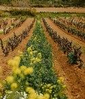 Moët Hennessy Joins For a Living Culture Agro-ecological...