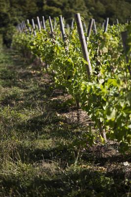 Moët Hennessy Vineyard and Château du Galoupet Vineyard