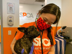 New ASPCA Survey Shows Overwhelming Majority of Dogs and Cats...