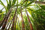 Thailand BOI Approves NatureWorks's Over 15 Billion Baht...