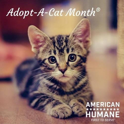 Celebrate Adopt-A-Cat Month®