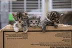 ASPCA Launches New Tool to Educate the Public on How to Help...
