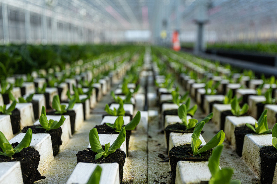 Revol Greens grows sustainably produced, organic lettuce products