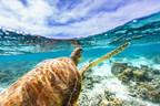 Sandals Resorts International Celebrates World Oceans Day...