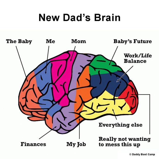 New Dad's Brain