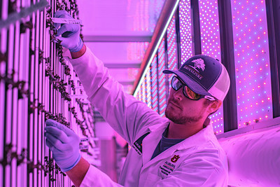 Auburn University graduate student Kyle Hensarling works with lettuce plants inside a vertical farm shipping container. The plants use red and blue LED lights for photosynthesis.