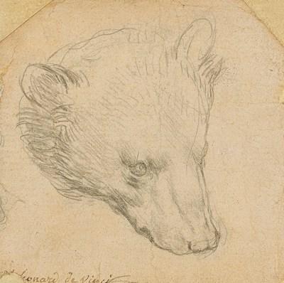 Leonardo da Vinci, 1452-1519, Head of a Bear, (estimate £8,000,000-12,000,000) ©Christie's 2021