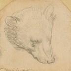 The 15th And 21st Centuries Meet: Leonardo Da Vinci's Head Of A Bear Reborn In The Metaverse By Hackatao