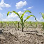 AXTER Agroscience vient à la rescousse des agriculteurs lourdement menacés par les affres de l'actuelle sécheresse qui frappe toutes les cultures aux quatre coins du Québec