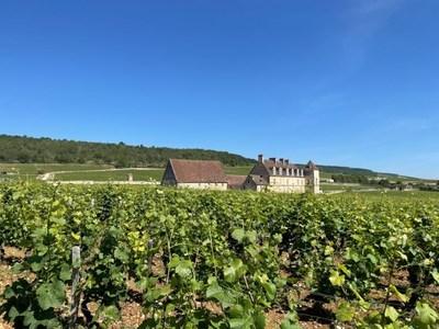 Evenstad Estates announces landmark 15-acre Burgundy vineyard expansion, including Grand Cru blocks in the renowned Clos de Vougeot Grand Cru vineyard.