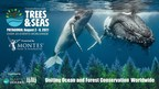 Trees & Seas Festival Continues to Grow
