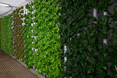 From seed to salad, Natural Grocers' GardenBox grows certified organic leafy greens in a vertical hydroponic system just steps away from the store's 100% organic produce department. Living produce is harvested daily and walked directly from the garden to the produce aisle.