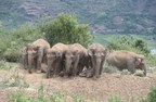 Xinhua Silk Road: China's migrating elephant herd safe under protection in Yunnan Yuxi