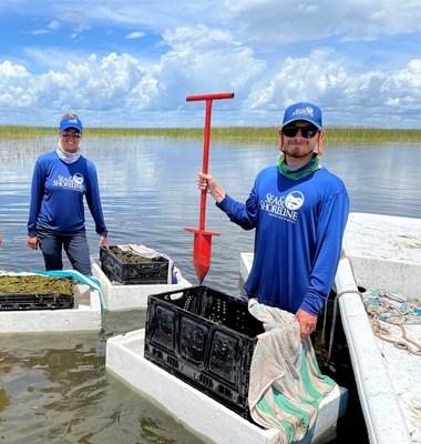 Sea & Shoreline biologists restore native submerged plants in Lake Istokpoga in Florida