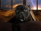 10 Tips to Prepare Pets before Storms and Wildfires Hit...