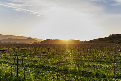 Napanook Vineyard in Yountville, California