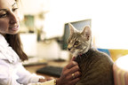 U.S. Employees Eager To Help Pets Win A Permanent Spot In The...