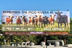 Peace 4 Animals Joins Coalition of Animal Welfare Organizations...