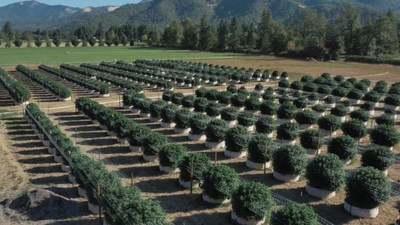 Learn more about Williams Wonder Farms: https://www.youtube.com/watch?v=aXUXnRb_Qh0 (CNW Group/Halo Collective Inc.)