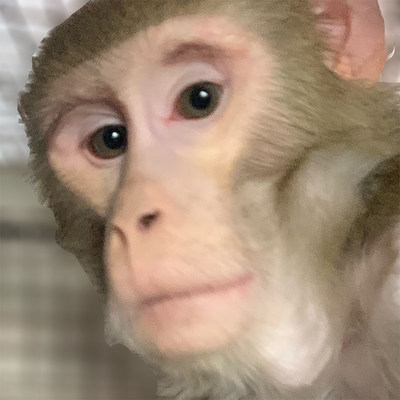 Leading animal welfare nonprofit Born Free USA welcomed Gambit, a 5-year-old rhesus macaque who had been kept as a pet, to its primate sanctuary in South Texas last week.