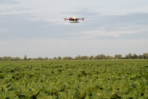XAG Agricultural Drone conducted fungicide spraying on Ukraine sunflower crops after rains