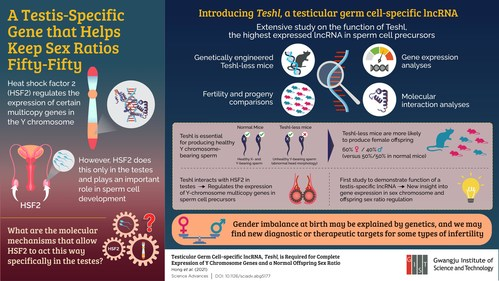 Research provides new insights on sex chromosome gene expression and sex ratio variations
