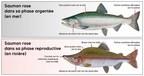 Nord-du-Québec - Modification réglementaire à la pêche sportive dans les zones 23 nord et 24