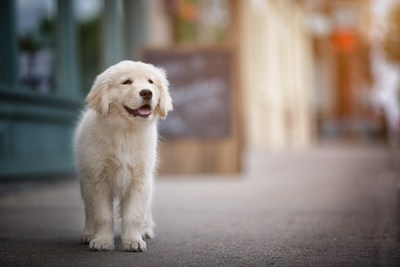 We created Puppyland to be the best resource in the puppy world. Our top priorities are puppy health and the loving care they receive at every point on their journey, from their time with breeders, to our store, and finally to a new home and family.
