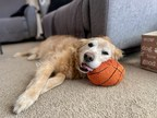 More Time Outside Means More Toxic Threats to Pets...