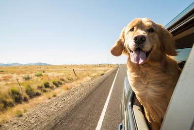 Find the perfect hotel for you and your pup