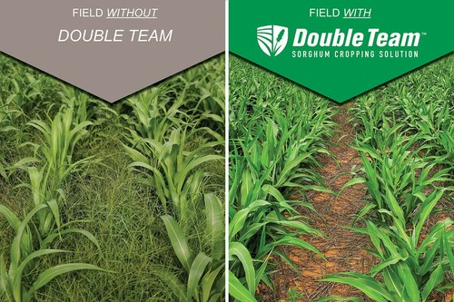 U.S. Sorghum Acreage to Potentially Expand with Help from First-Year Use of New Cropping Solution