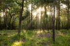 Patten Properties Announces Deer Forest Acreage Community, Estate ...