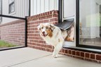 PetSafe® Expanding Line of Pet Doors With Extreme Weather Sliding ...