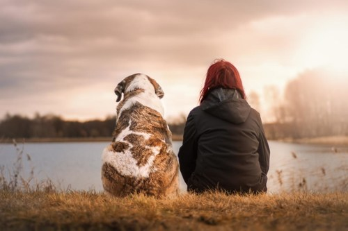 """PETS MAKE PEOPLE FEEL LOVED. Check out """"Your Pet and Covid-19"""" zoom webinar on OBHEALTHY Physician Health Network, Sat Sept 11, 1-3 pm ET. Get answers to pet care questions. Playback will be available on youtube.com"""