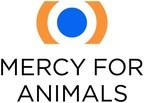 食品公司在加拿大动物福利记分卡排名第一