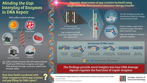 GIST Scientists Unravel the Inner Workings of DNA Repair Enzymes
