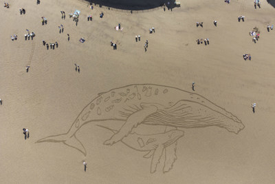 50 metre humpback whale & calf filled with plastic is seen on the beach at Whitby as a new report from BRITA and Whale and Dolphin Conservation finds that plastic affects 81% of whale and dolphin species.