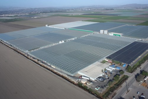 Camarillo, California Controlled Environment Agriculture Facility (CNW Group/Mucci Farms)