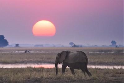 Elephant at sunset in Zimbabwe