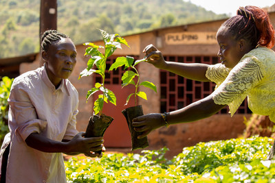 Fairtrade farmers and workers across the world have shared that climate change is an immediate threat to their livelihoods, and to products loved around the globe, like coffee, cocoa and bananas. In an open letter to world leaders, 1.8 million Fairtrade farmers and workers are calling for action, including these farmers, pictured in Kenya. Consumers worldwide are invited to raise the voices of farmers by signing a petition leading up to the COP26. Credit Fairtrade Netherlands and Fairtrade