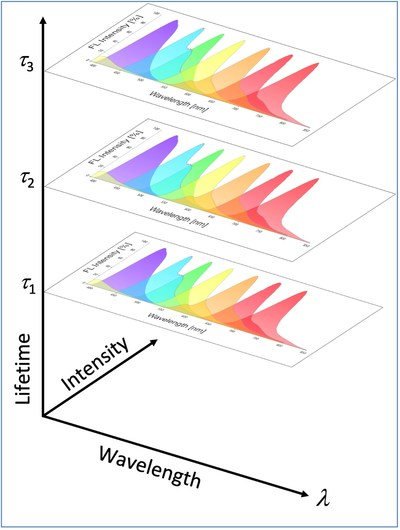"""Kinetic River's time-resolved flow cytometry technology measures dye fluorescence emission lifetimes, allowing the use of """"stacks"""" of dyes as schematically illustrated here. The dyes in each layer in the stack are grouped (and distinguished) by lifetime, doubling or tripling the number of measurable parameters."""
