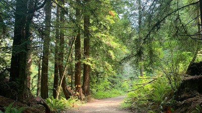 Mendocino and Humboldt Redwood Companies are offering rural development properties along the north coast of California. Suitable uses include custom homesites, timberland investment, and recreation including hunting, hiking, and camping.